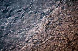 Petjades al fang